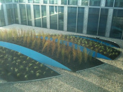 A new planting of drought and shade-resistant grasses for the blue garden