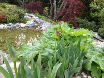 Japanese-style garden